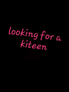 Looking for kittens