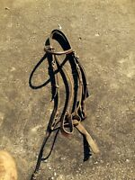 English bridles