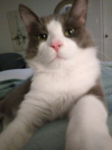 beautiful male cat needing a loving forever home