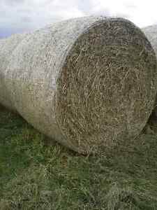 Pea or oat straw