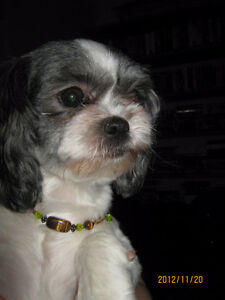 Grooming in your home or mine and pet sitting Gatineau Ottawa / Gatineau Area image 1