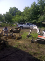 Professional Tree Removal and Maintenance