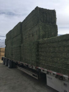 HAY & STRAW  FOR SALE. Large Bales only