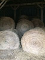 HIGH QUALITY HORSE HAY