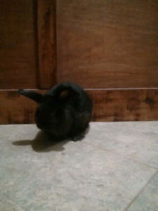 Male Bunny for free