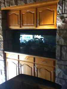 Tropical Fish Tank Cleaning Service London Ontario image 2