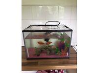 Fish tank plus x3 fish