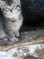 Gorgeous, cute, cuddly kittens for Christmas