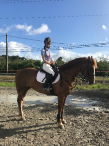 Horse Exercise Rider