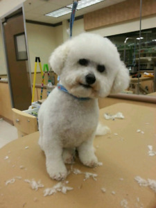 Christmas dog grooming appointments