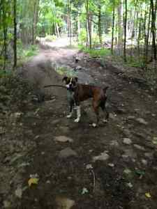 Hunting lot in algonquin highlands for sale Hunt camp W permit Peterborough Peterborough Area image 9