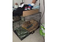 Medium sized cage was used for staffy