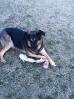 Loving boy needs a great home