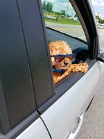 Dogs to take care in Dauphin MB
