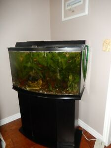 Fish tank, stand, 2 pumps, accessories and lots of fish