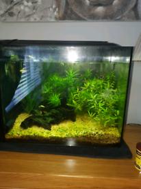 Aquarium 60l Fluval