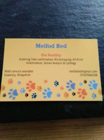 Meifod Red