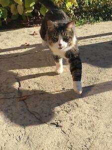 Cat needs a home