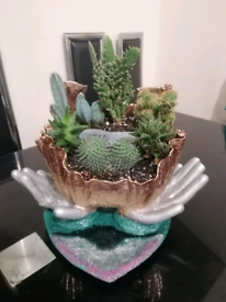 Plants/house plants/home decorations/cuctus and succulents /handmade