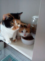2 cats for sale - sisters
