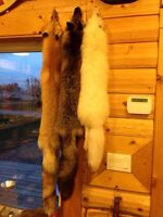 Tanned furs for sale