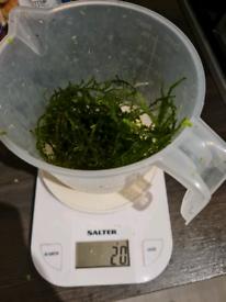 20g Java moss aquarium fish tank