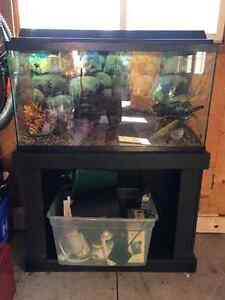 60 gal fish tank with stand and all assesories