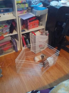 Playpen for small animal looking to trade