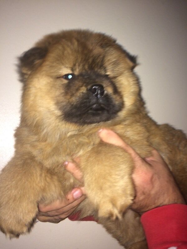 Gumtree Dogs For Sale Bristol