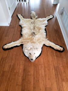 Beautiful tanned timber wolf rug.
