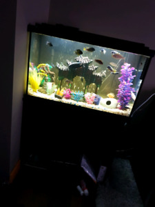 30 gal aquarium with fish and all accessories