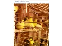 Bird for sale