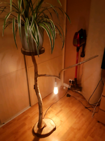 Drift wood lamp/ stand