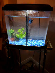 2 Gallons Fish Tank with 2 bettas