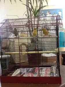 Canaries & cage