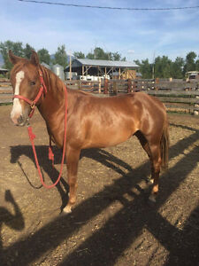 Bold and beautiful 2yr old gelding!