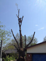 Over the Top Tree Service - Tree Pruning/Tree Removal