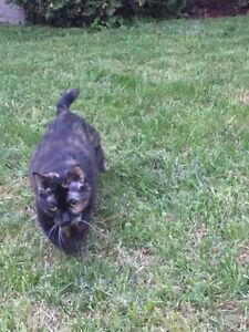 Spotted elderly tortoiseshell cat wandering around