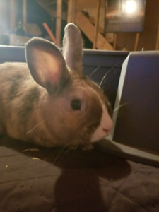 Bunny for rehoming