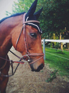 Jumper Mare For Part-board