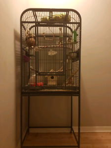 Large metal bird cage with toys