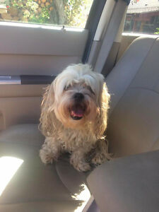 Small dog found in Eastview (Red Deer)!!!