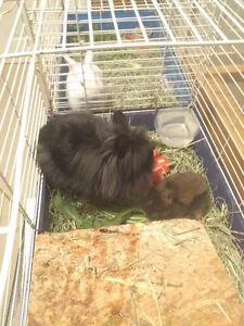 Bunnies Cambridge Kitchener Area image 5