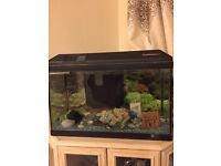 Fish tank for sale without pump.