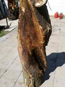 Twisted Ash for custom wood working London Ontario image 1