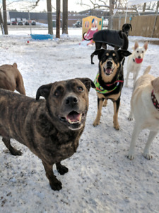 ISO: Land to Rent for Dogs to Run & Play