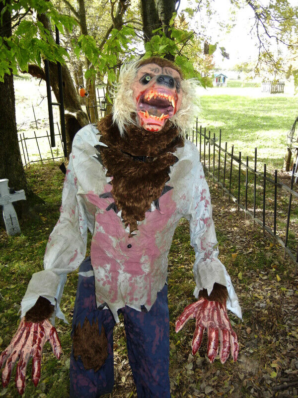 ANIMATED 6 FOOT 6 INCHES TALL LIFE SIZE  LUNGING WEREWOLF DELUXE HALLOWEEN PROP