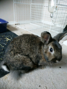 Bunny....needs a good forever home.