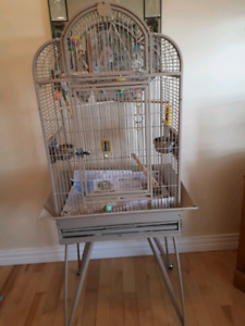 2 FEMALE COCKATIELS & LARGE CAGE