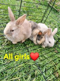 7 rabbits